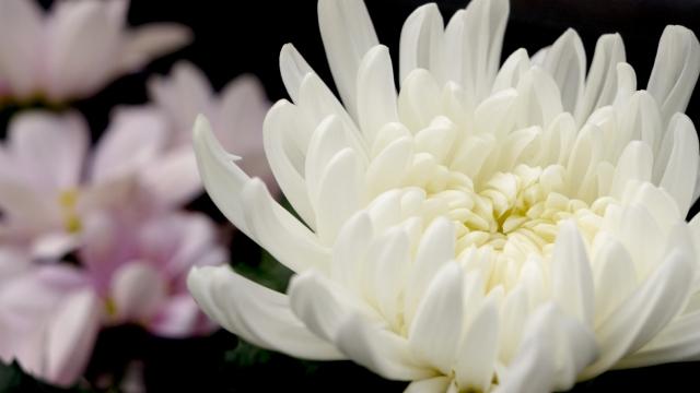【49日のお供えに人気のお花・アレンジメント6選】選ぶ基準~マナーまで