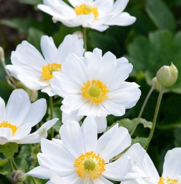 白い野花の写真